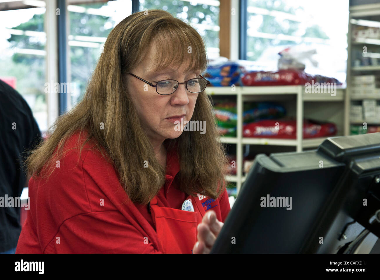 middle aged woman supermarket clerk concentrates on her register in small local supermarket in town of Long Beach - Stock Image