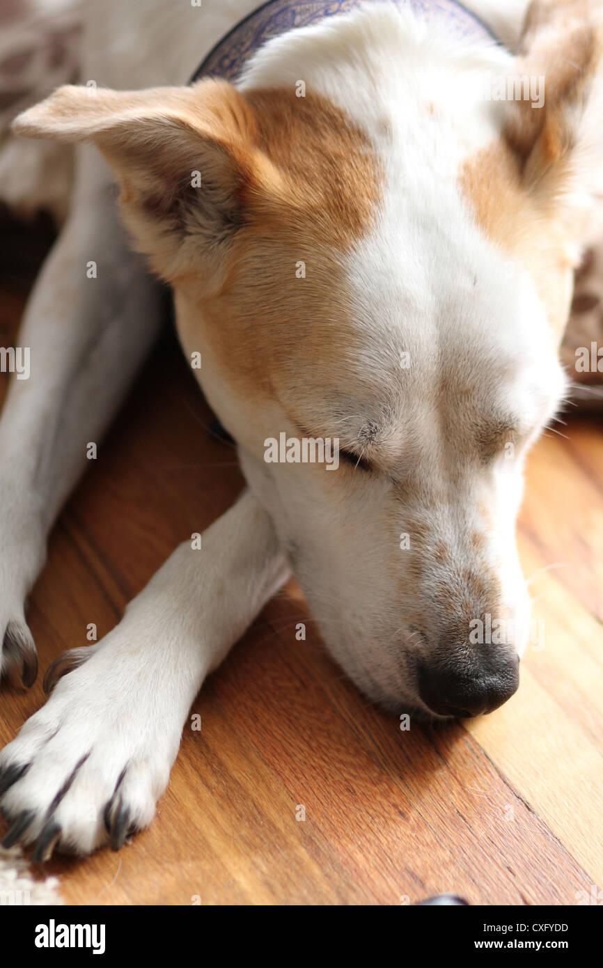 Dog Paws Up Face Stock Photos & Dog Paws Up Face Stock