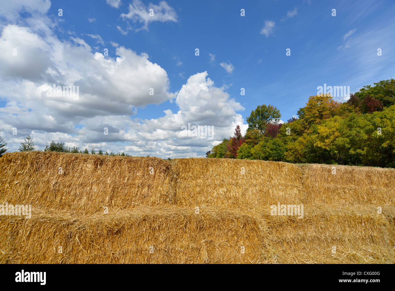 Hay bails in a field - Stock Image