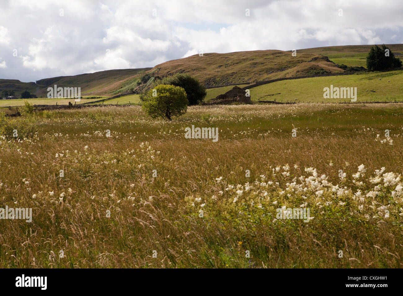 A late summer wild flower meadow at Moor House Nature Reserve in Upper Teesdale, County Durham - Stock Image