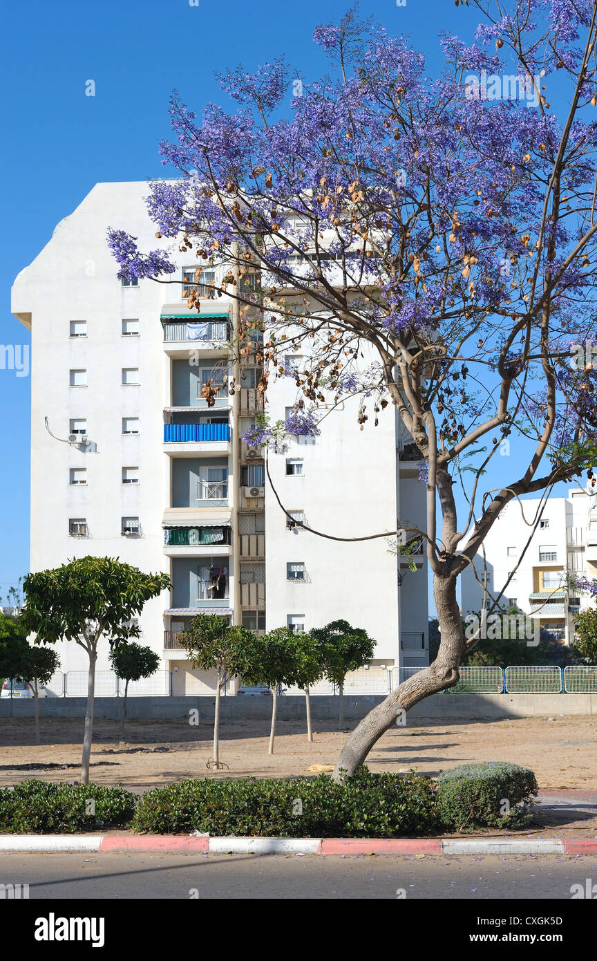 House and flowering trees in the city of Ashkelon, Israel - Stock Image