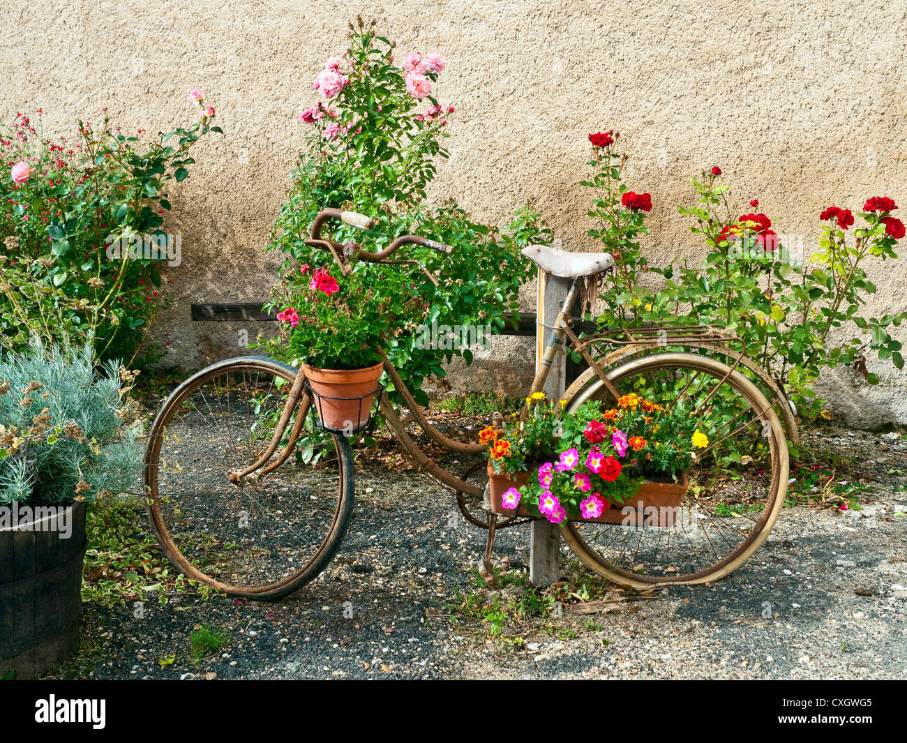 Rusty bicycle used a flower display - France. - Stock Image