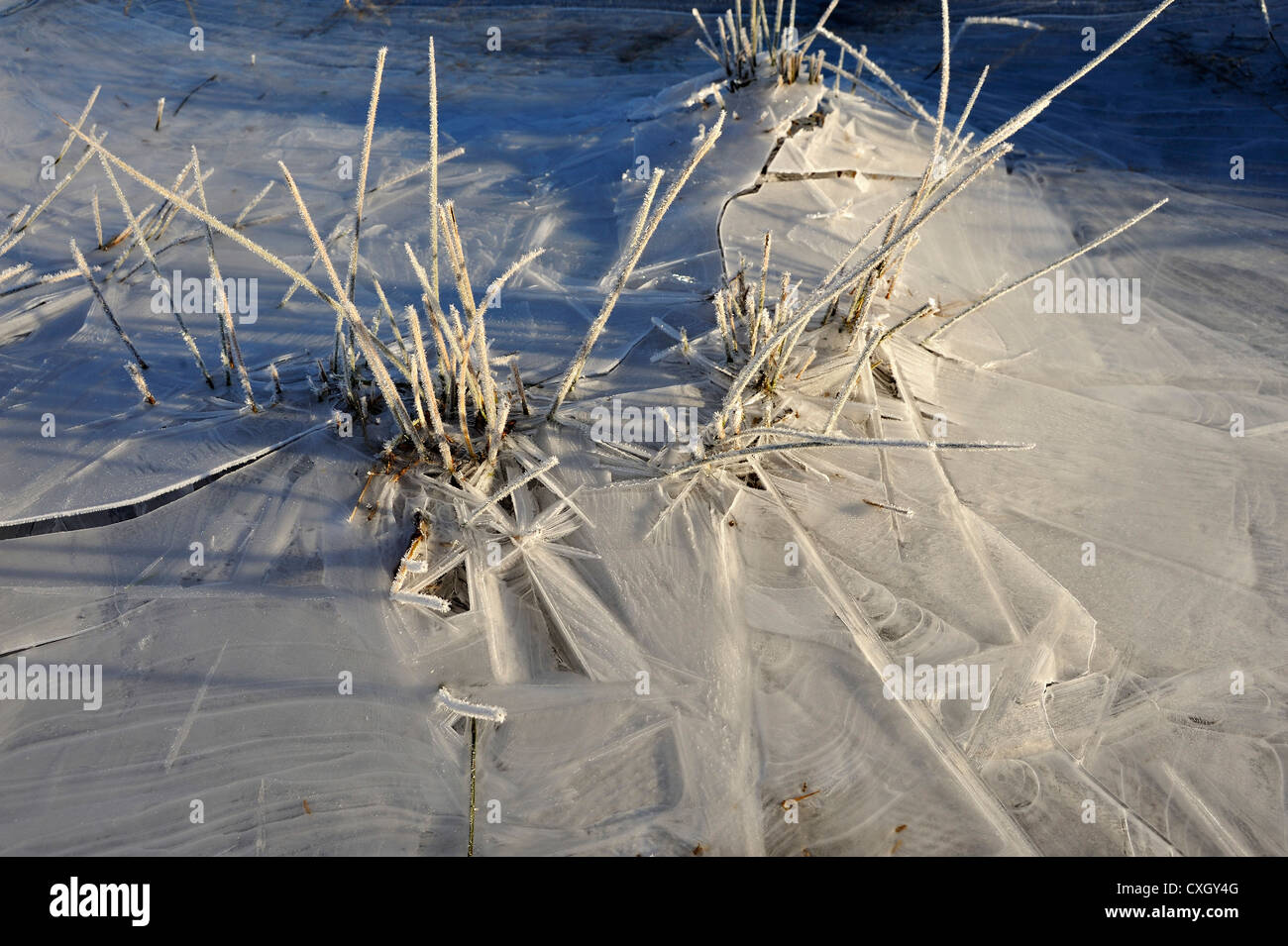 Frozen grasses and thin ice in a flooded field create pattern and texture, Killin, Scotland - Stock Image