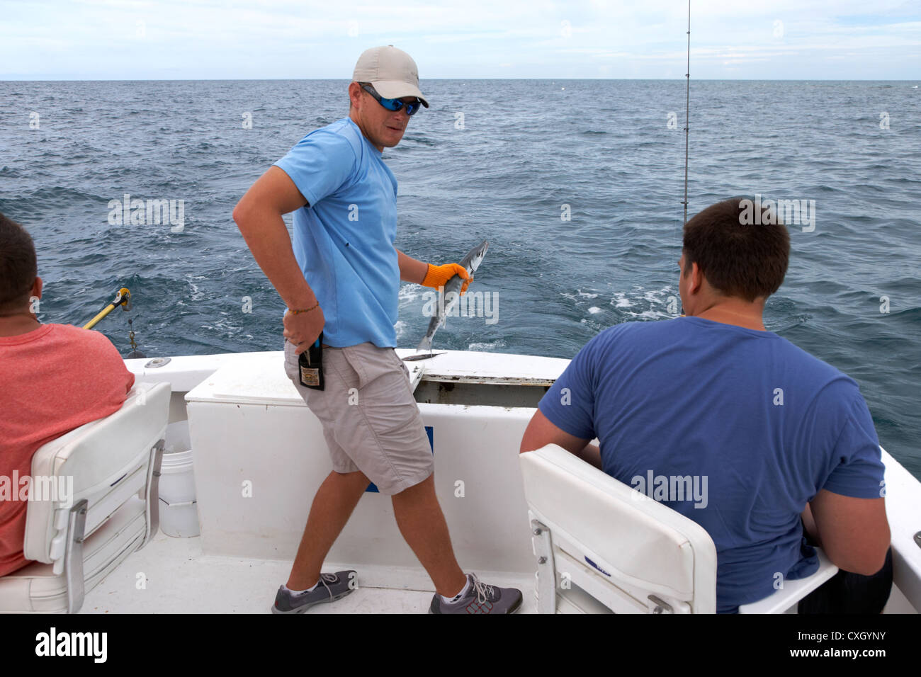 crew member with barracuda fish hooked on a charter fishing boat in the gulf of mexico out of key west florida usa - Stock Image