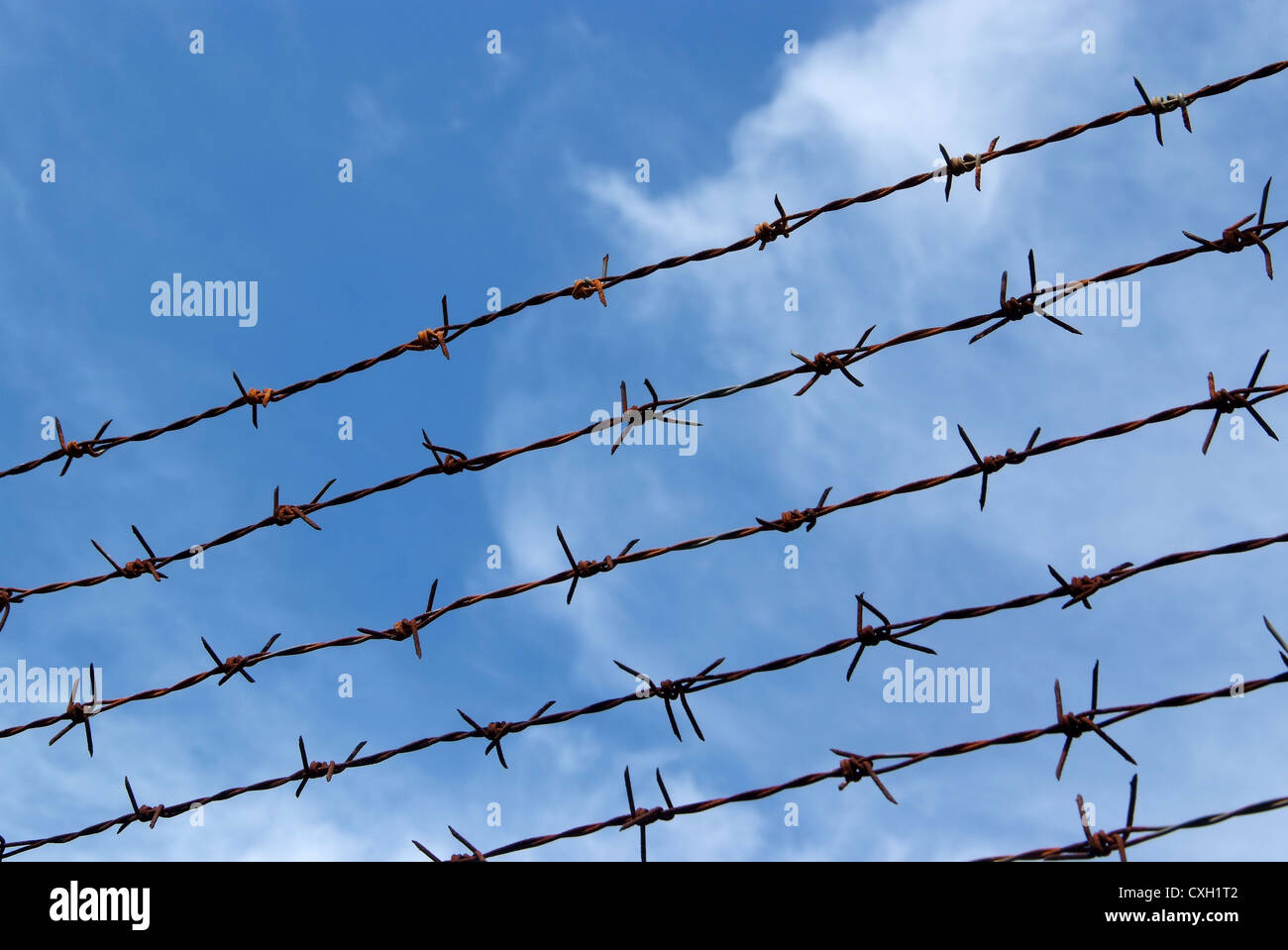 Barb wire fence and blue sky blackground - Stock Image