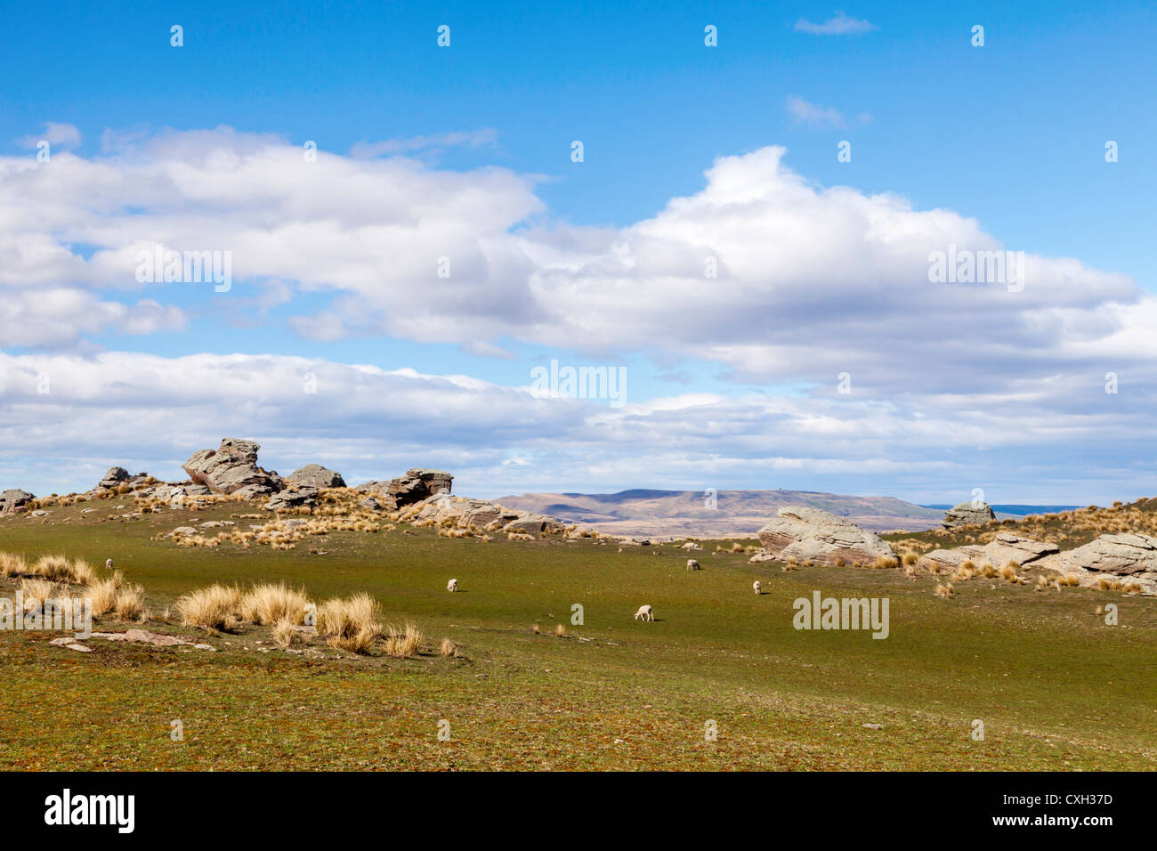Otago high country - Stock Image