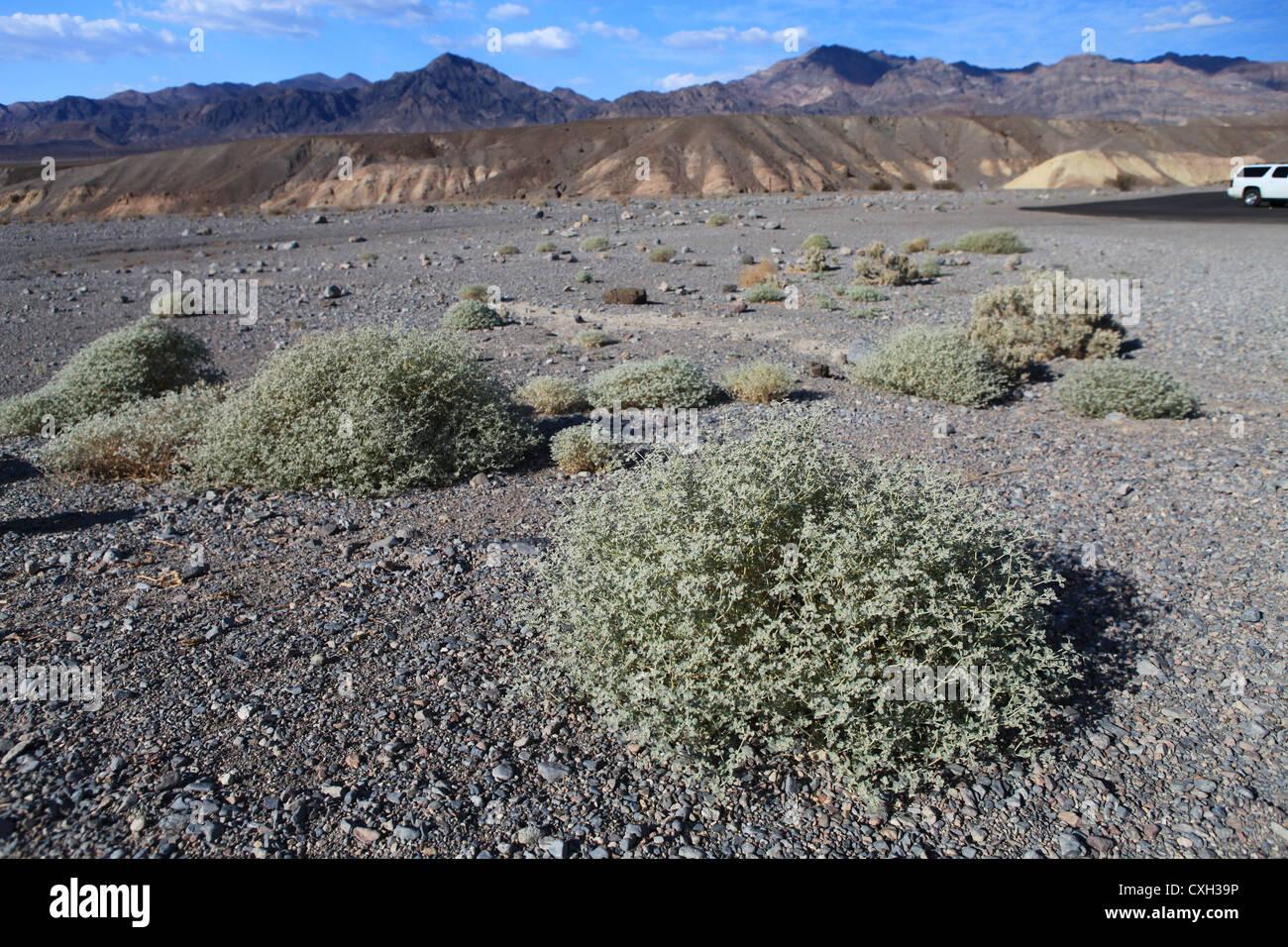 desert landscape desert shrubs small stock photos desert landscape