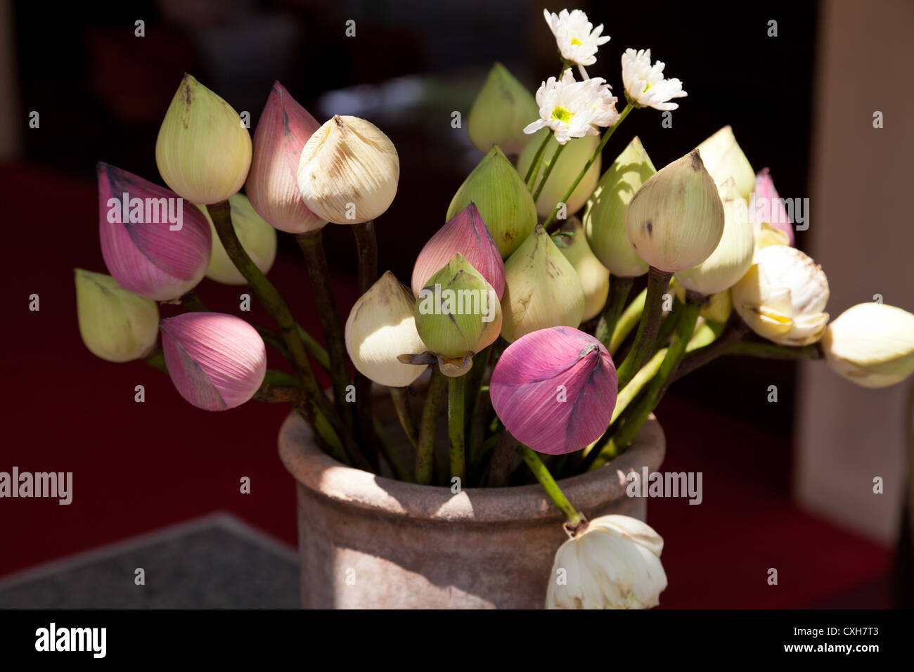 Flowers on a Flower Market in Chiang Mai - Stock Image