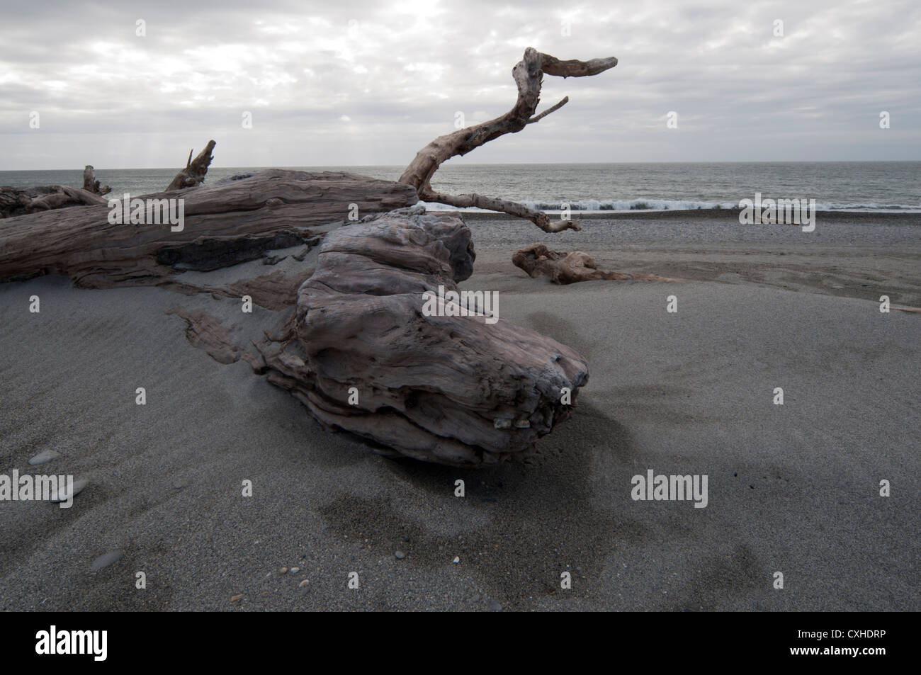 The sea sculptured fantastic structures in this deadwood near Ship Creek in New Zealand's West Coast.  Treibholz - Stock Image