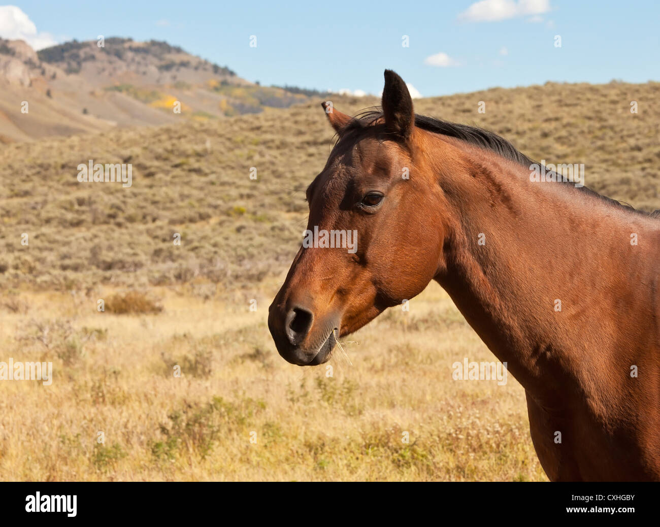 Chestnut brown horse in pasture with mountain in background - Stock Image