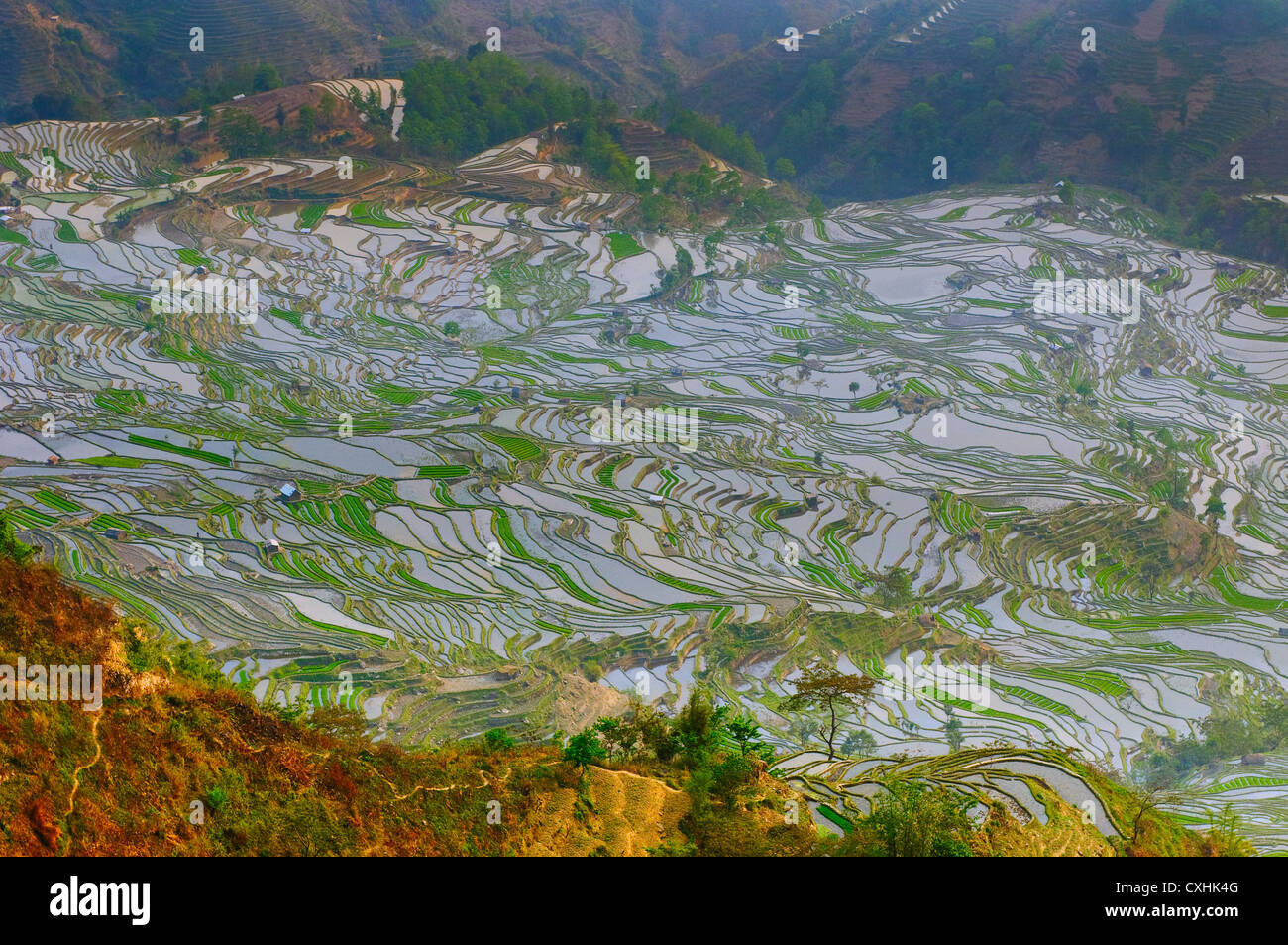 rice terraces of yuanyang,  yunnan, china - Stock Image
