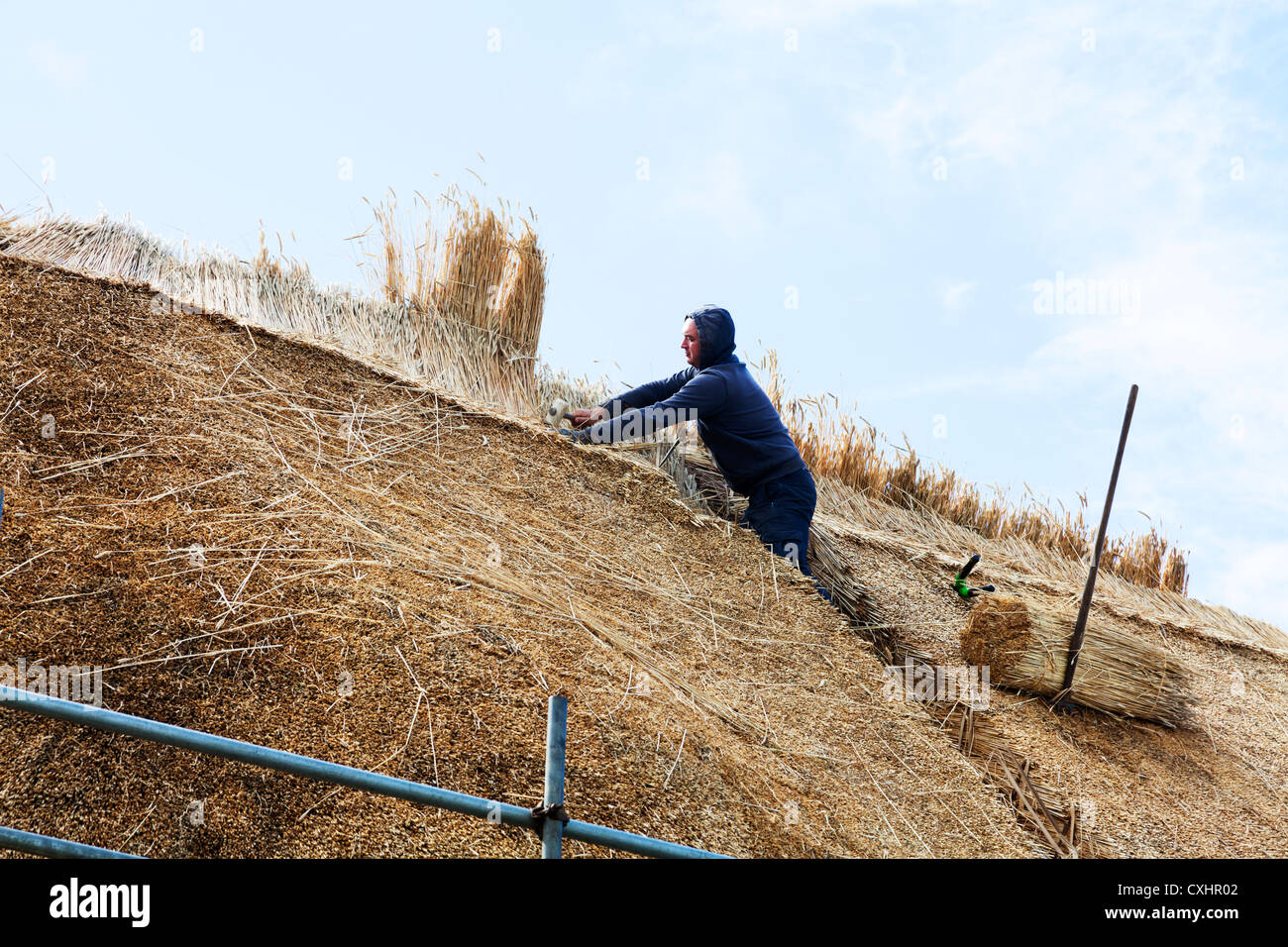 Man thatching house roof with straw workman thatcher packing straw tight to make watertight - Stock Image