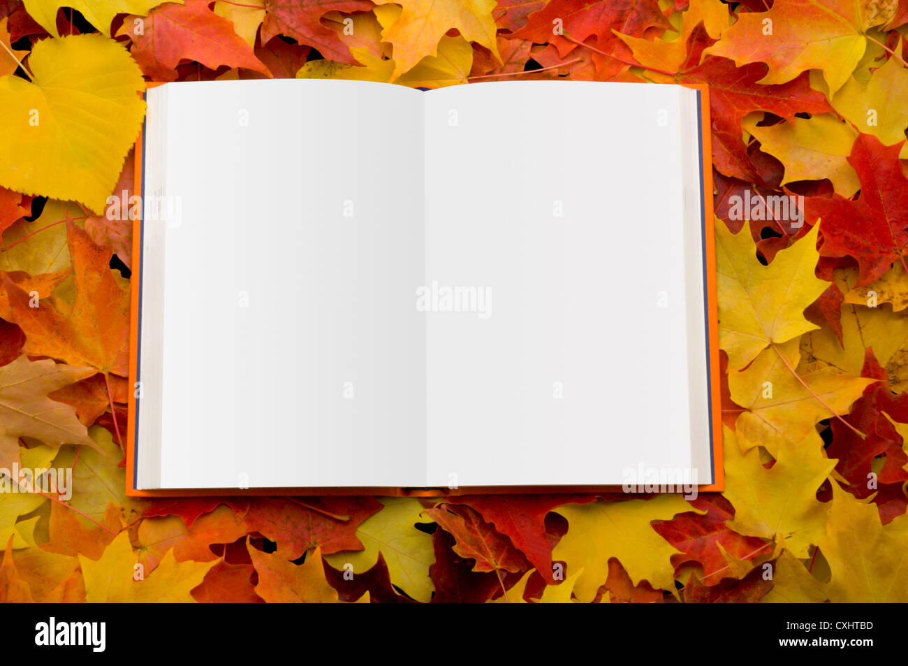 Open book on autumn leaves - Stock Image