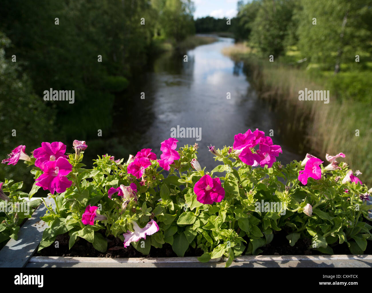 Decorative flowers at bridge parapet , Finland - Stock Image
