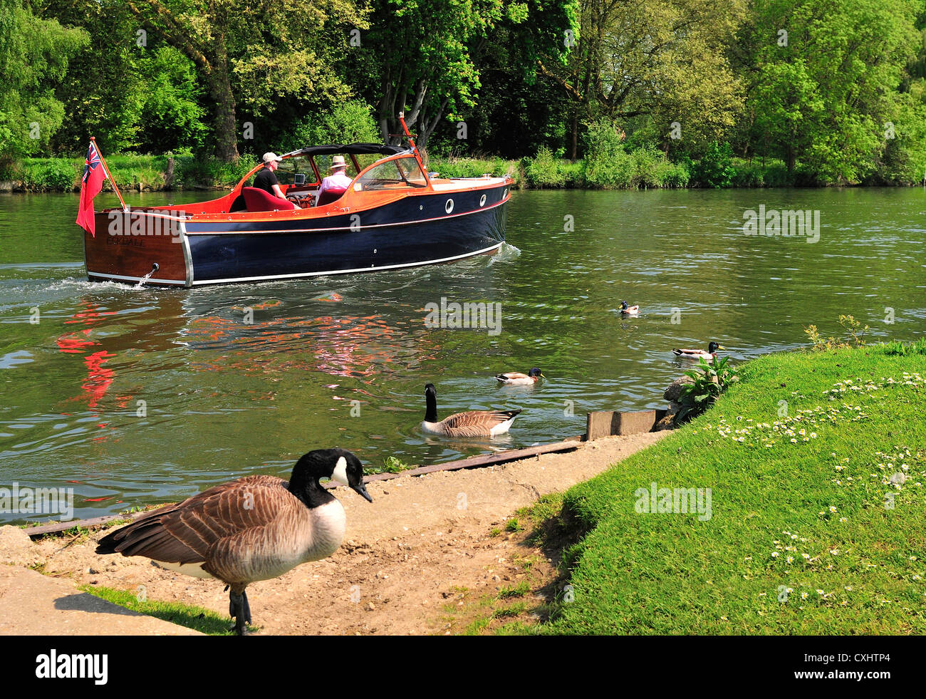 Cruising on a gentlemans motor yacht,on the  upper reaches of the Thames , Pangbourne,  .Berkshire - Stock Image