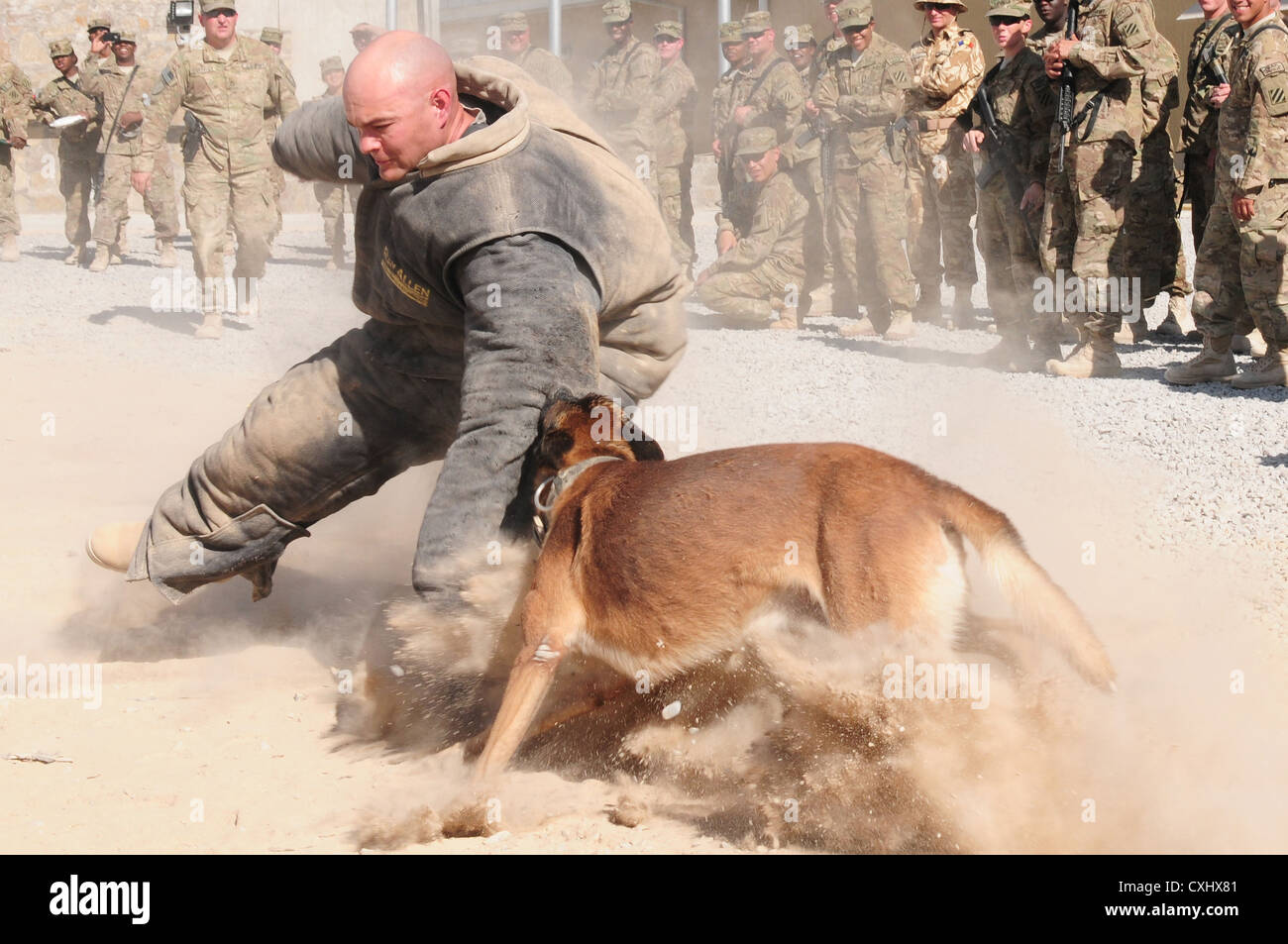 Simple Soldier Army Adorable Dog - a-us-army-soldier-wears-a-protective-suit-while-being-attacked-by-CXHX81  Pic_821124  .jpg
