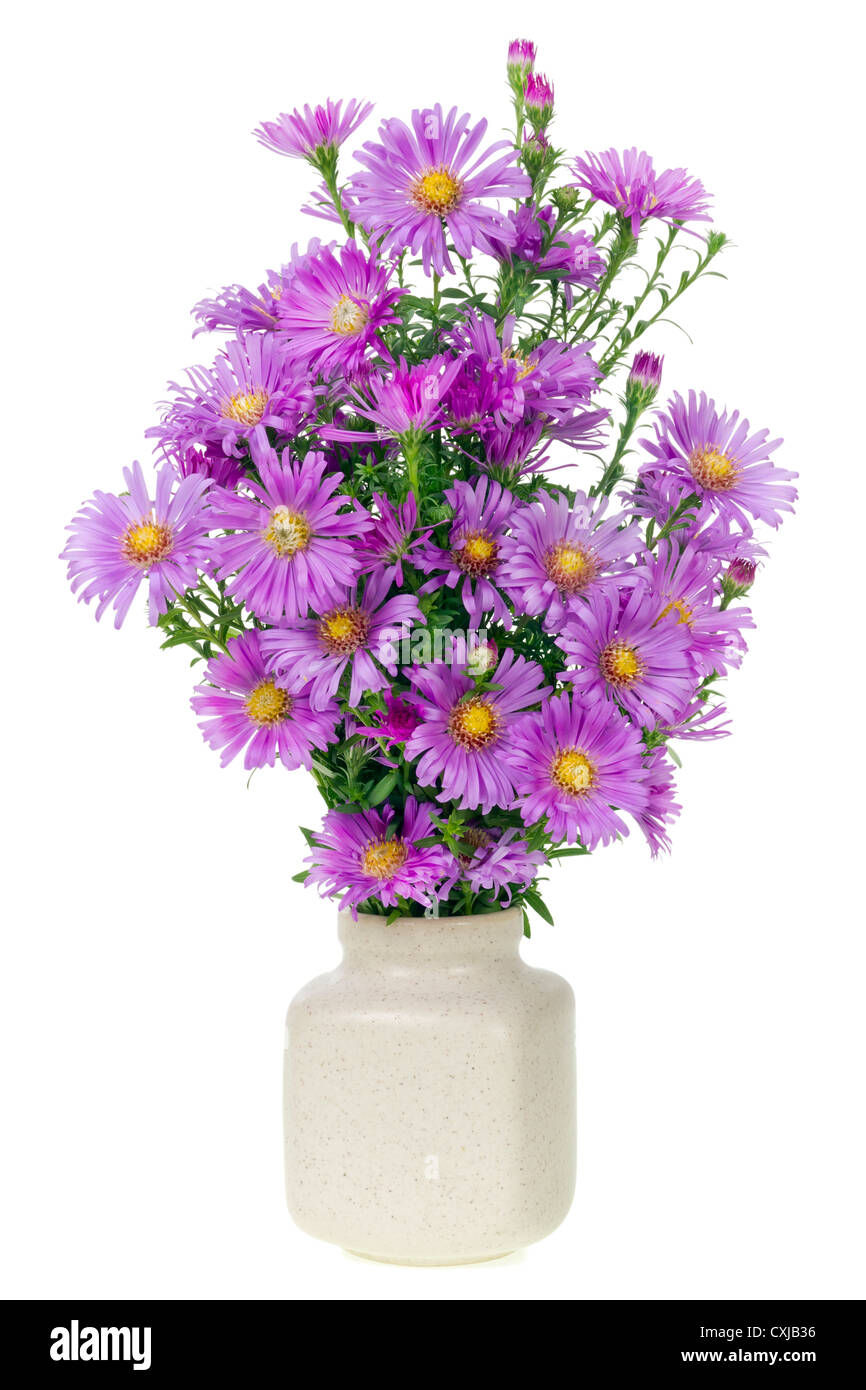 minimalistic bouquet number 9 - mini autumn magenta chrysanthemums flowers in ceramic pot vase isolated. Selective - Stock Image
