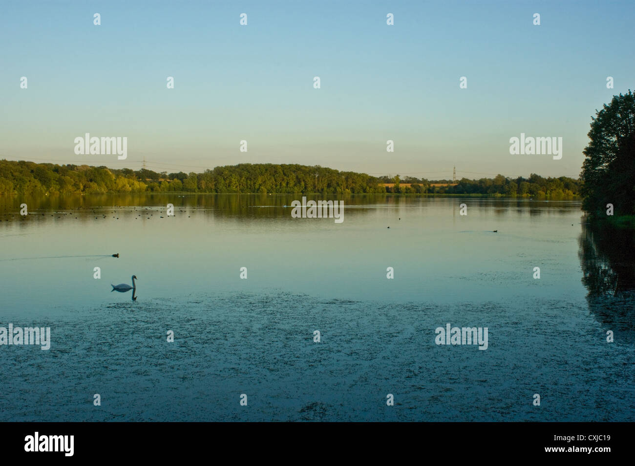 Evening at Swithland Reservoir, Leicestershire - Stock Image