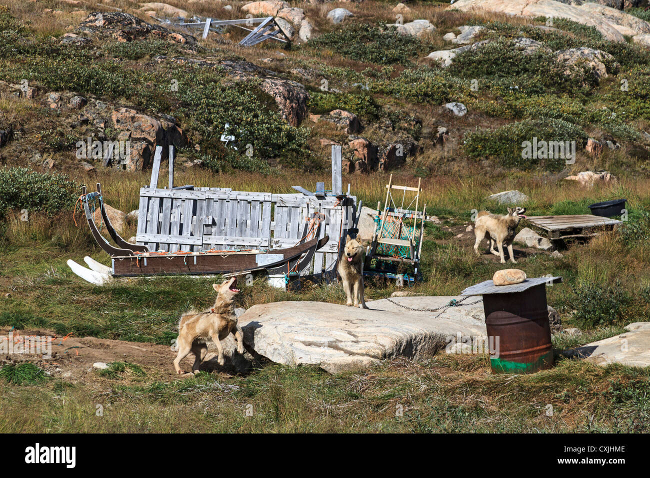 Sled dogs sit by their kennels at Ilulissat, Greenland - Stock Image