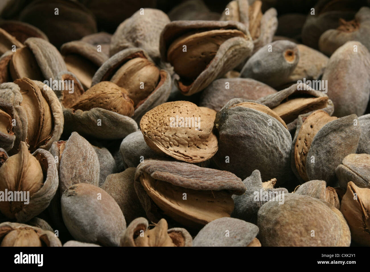 Picture: Steve Race - A mixed bag of Spanish almonds, often called Común or Common Almonds. - Stock Image