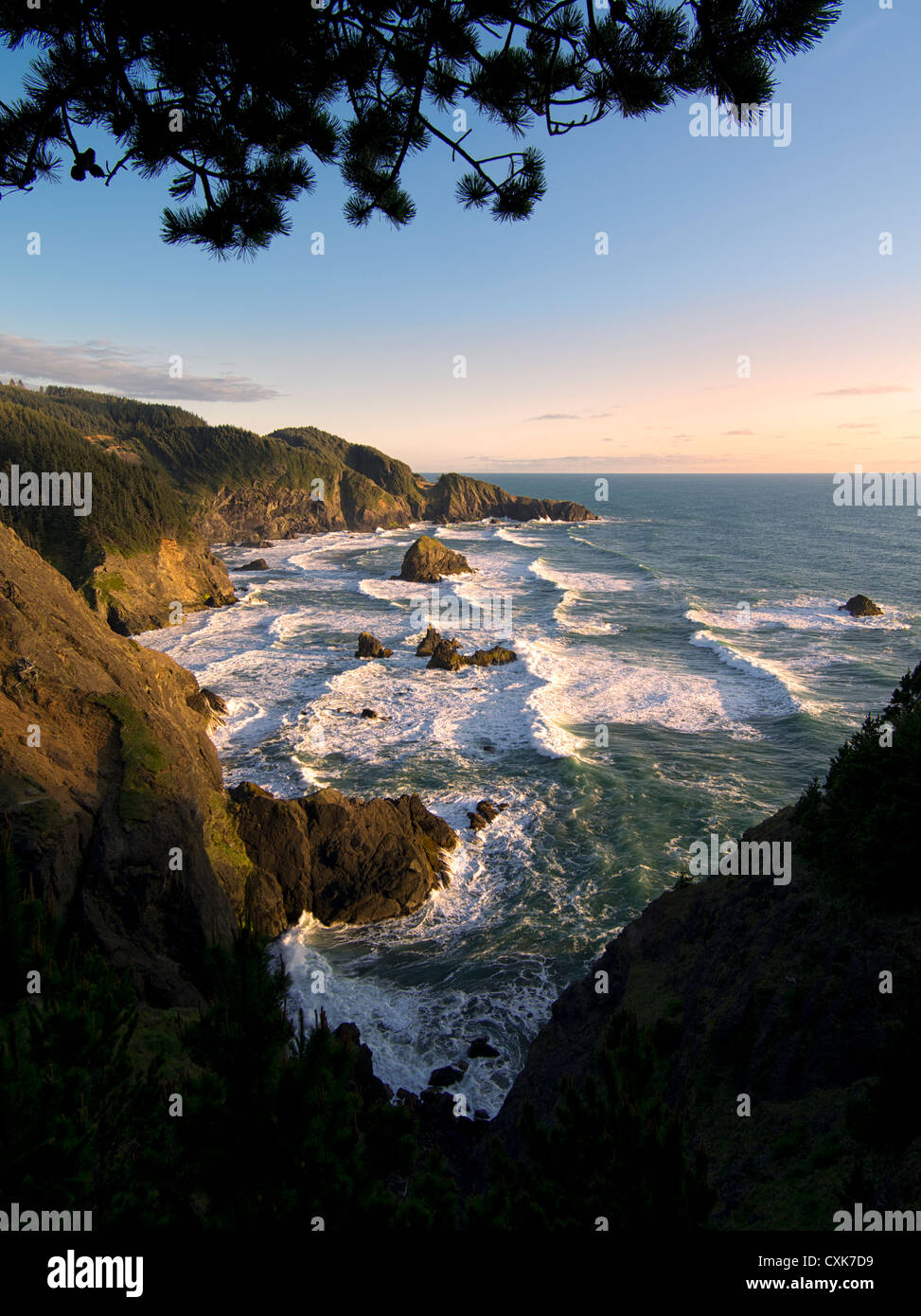 Overhanging tree and surf at Samuel H. Boardman State Scenic Corridor. Oregon - Stock Image