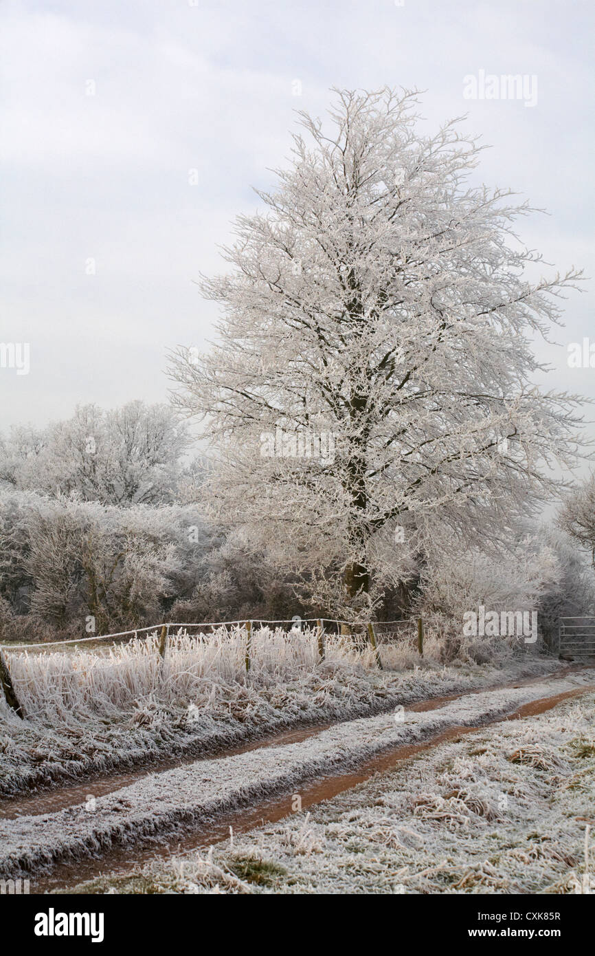 Cold frosty morning in January with hoar frost on the trees and grasses Stock Photo