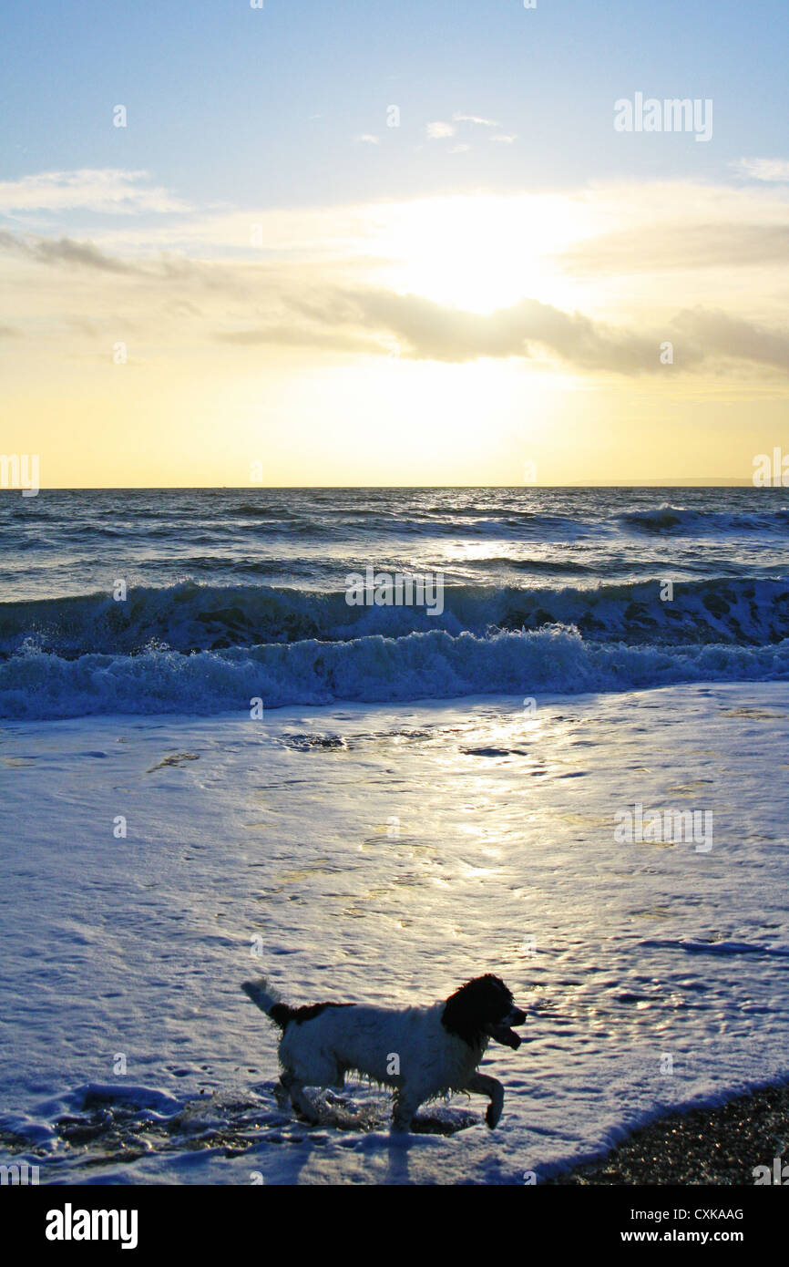 Photo of a dog in front of a sunset backdrop over the sea. - Stock Image