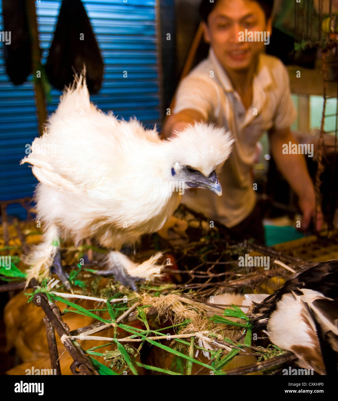 Food vendor shows off his Chinese feathery chicken on at the Daijing Lu open air market in Shanghai, China, - Stock Image