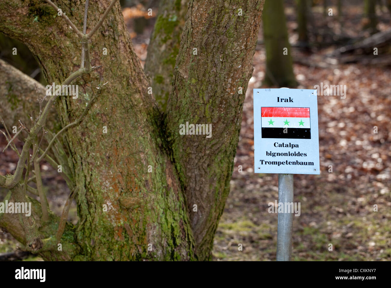 Sign with the national flag and a tree of  the states Germany has diplomatic relations with, Iraq, Southern catalpa, - Stock Image