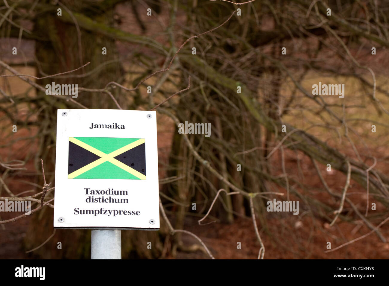 Sign with the national flag and a tree of  the states Germany has diplomatic relations with, Jamaica, Bald-cypress, Stock Photo
