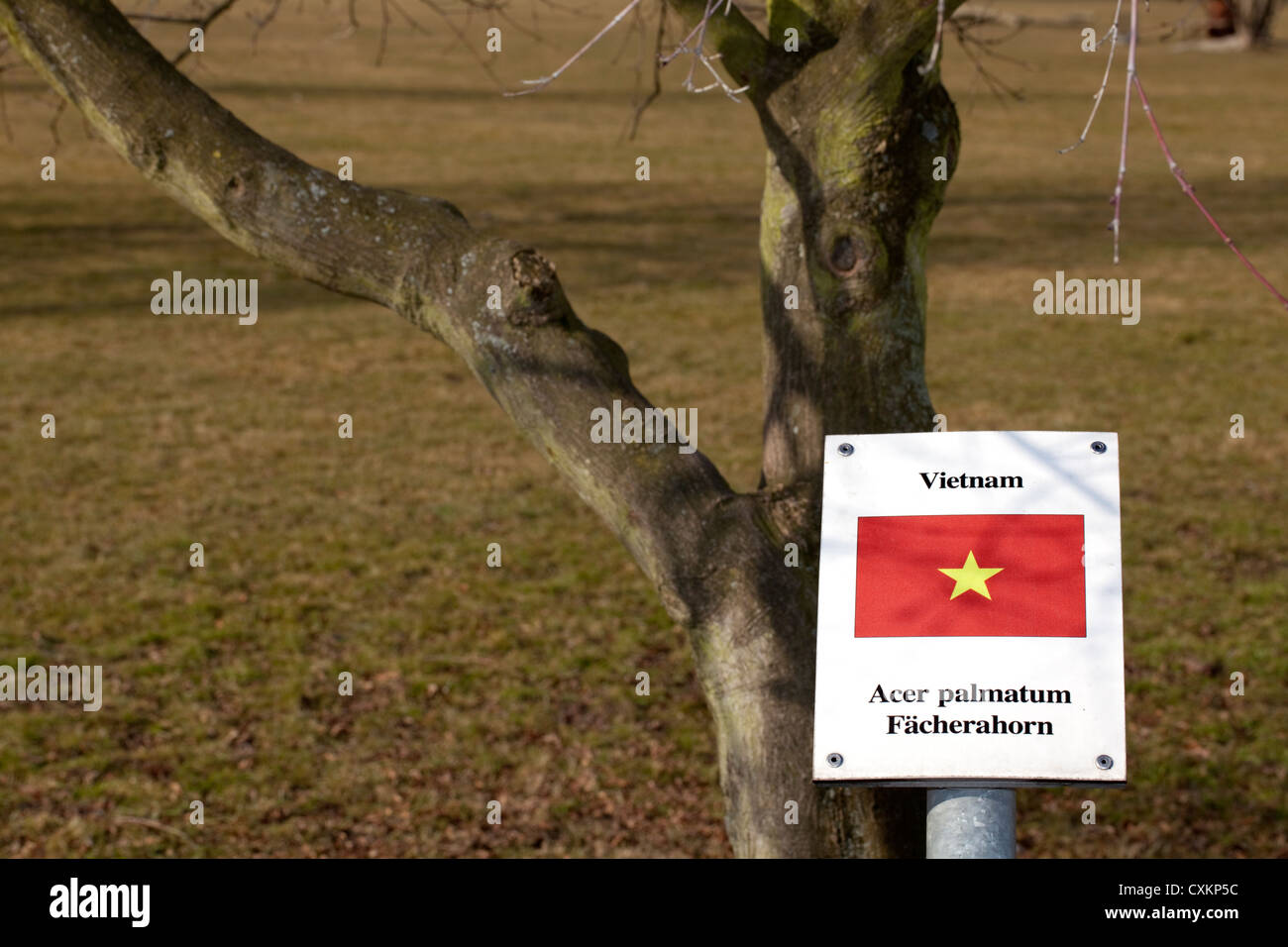 Sign with the national flag and a tree of  the states Germany has diplomatic relations with, Vietnam, Japanese maple, - Stock Image