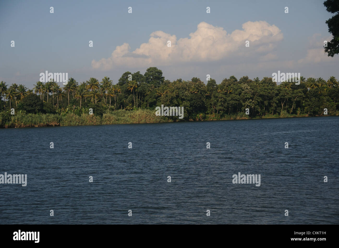 Periyar River, Alwaye, Kerala, India - Stock Image