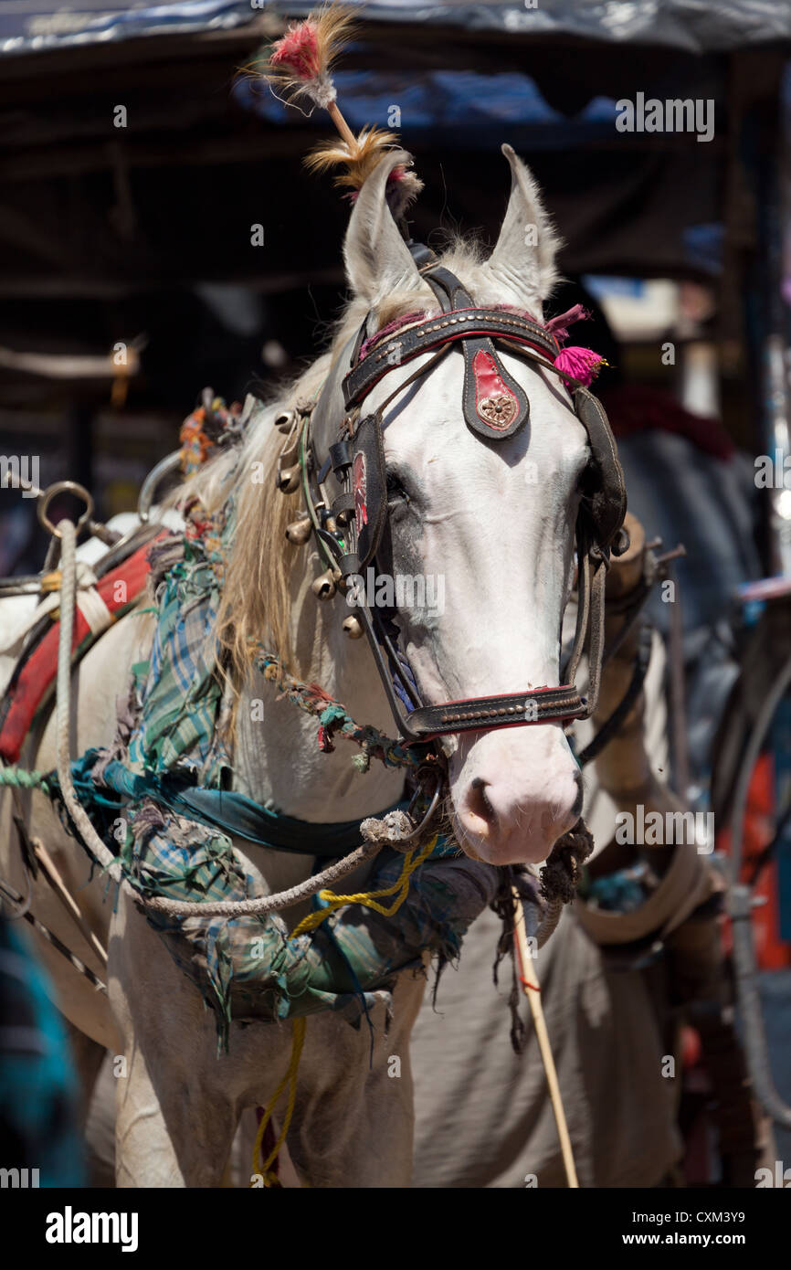 Horse in Varanasi - Stock Image