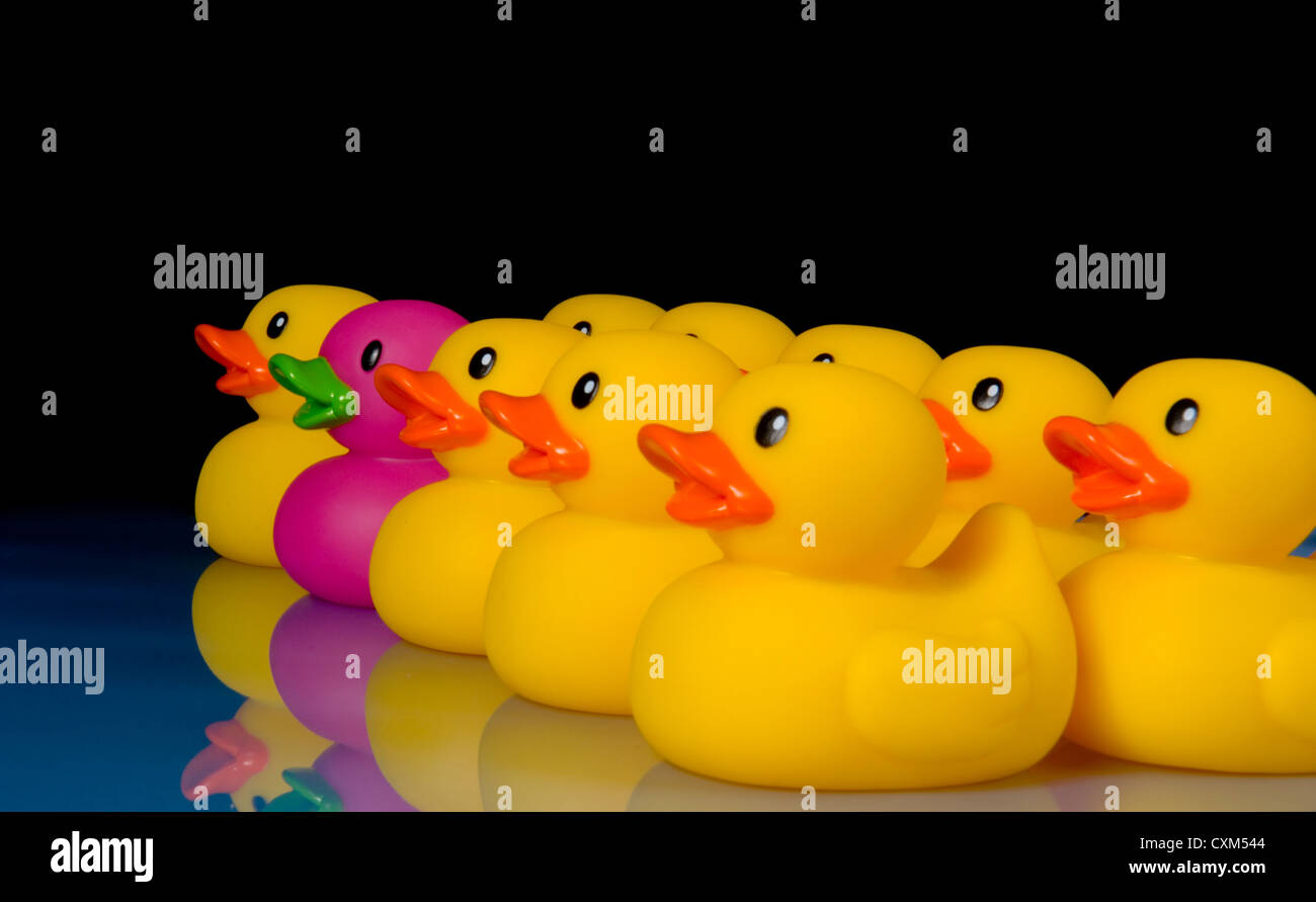 Purple rubber duck surrounded by yellow rubber ducks to emphasize ...