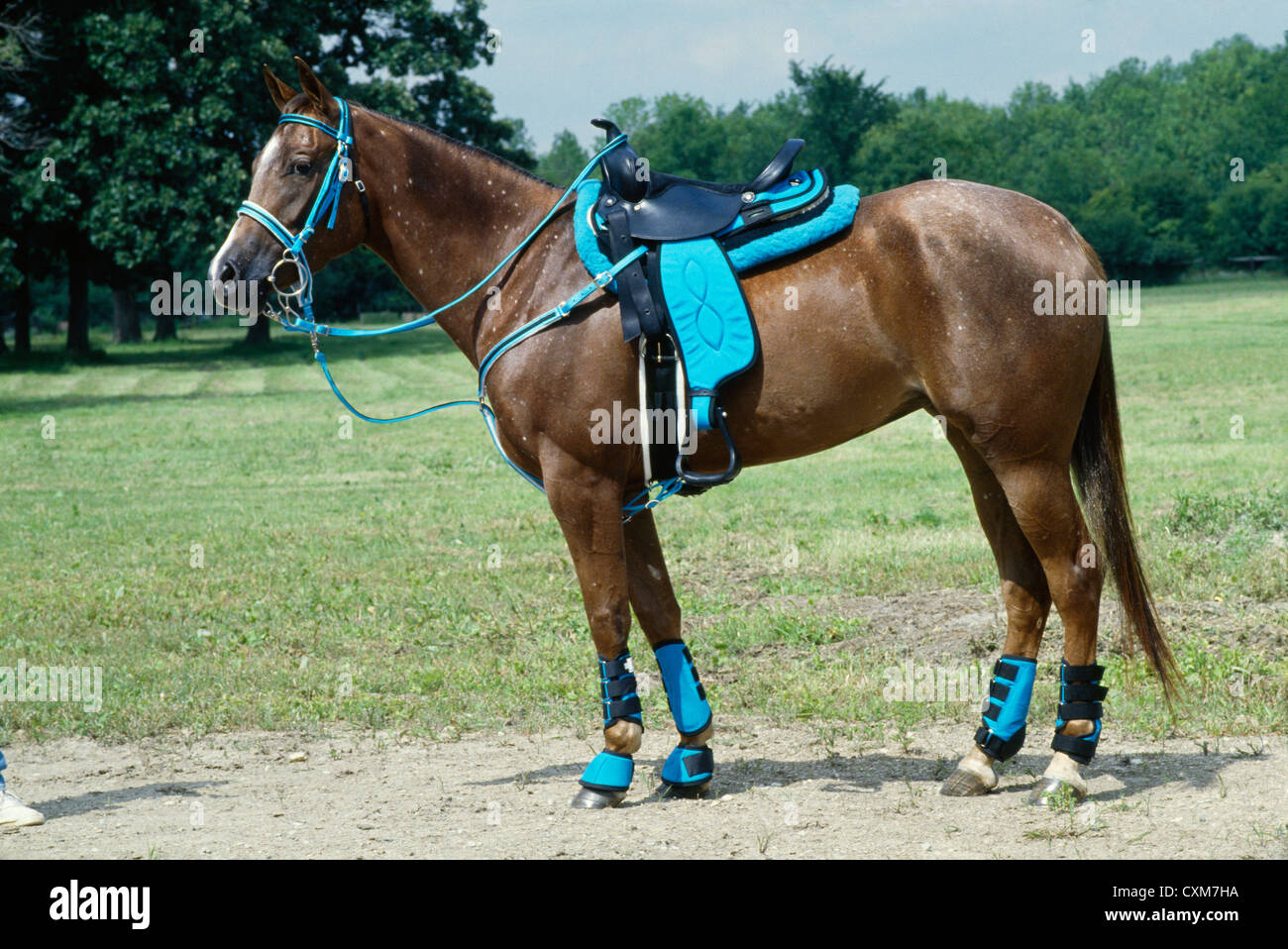 Western Tack High Resolution Stock Photography And Images Alamy
