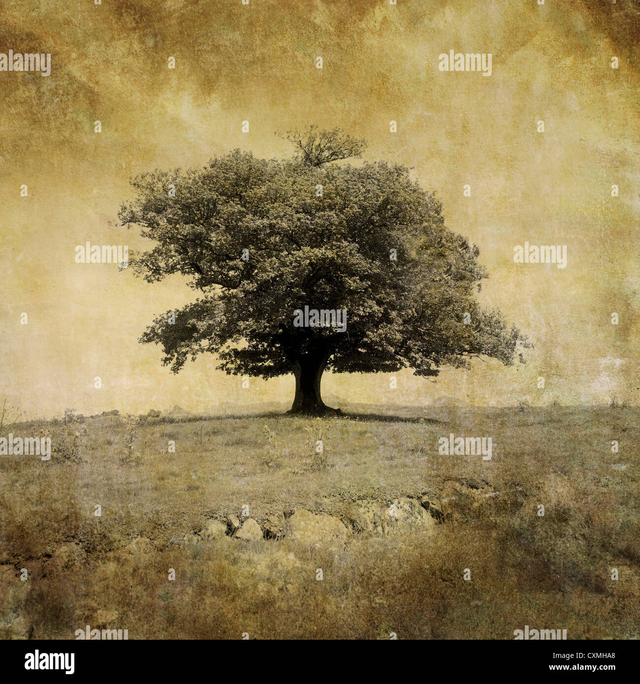 Oak Tree - vintage-look textured art effect image - Stock Image