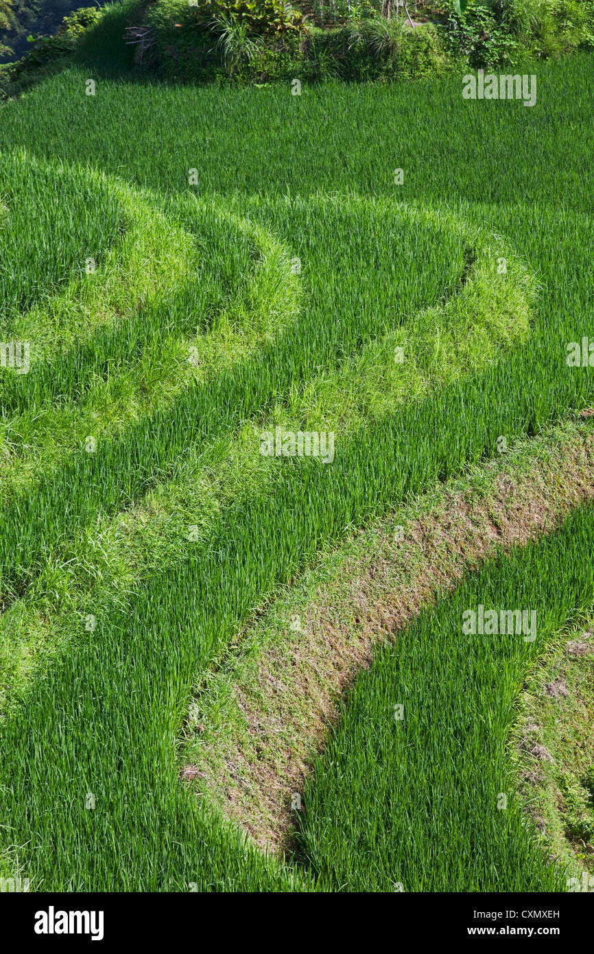 Terraced Rice Fields in the mountains of southeast China - Stock Image