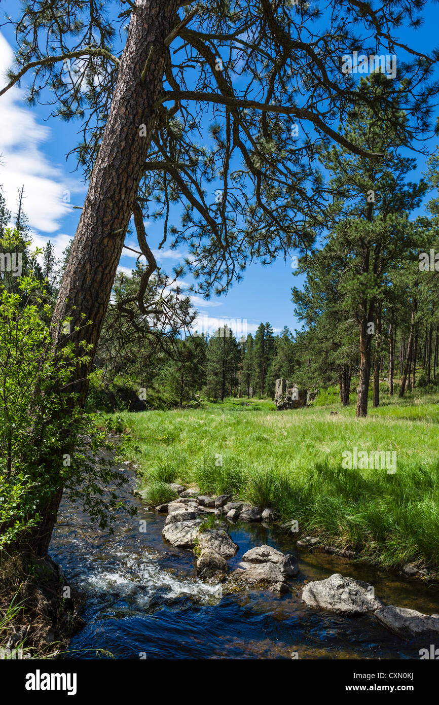 Stream at Blue Bell picnic area alongside Route 87 in Custer State Park, Black Hills, South Dakota, USA - Stock Image