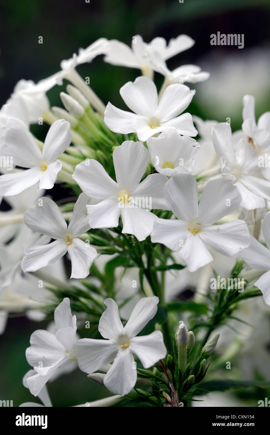 Scented White Flowers Choice Image Flower Decoration Ideas