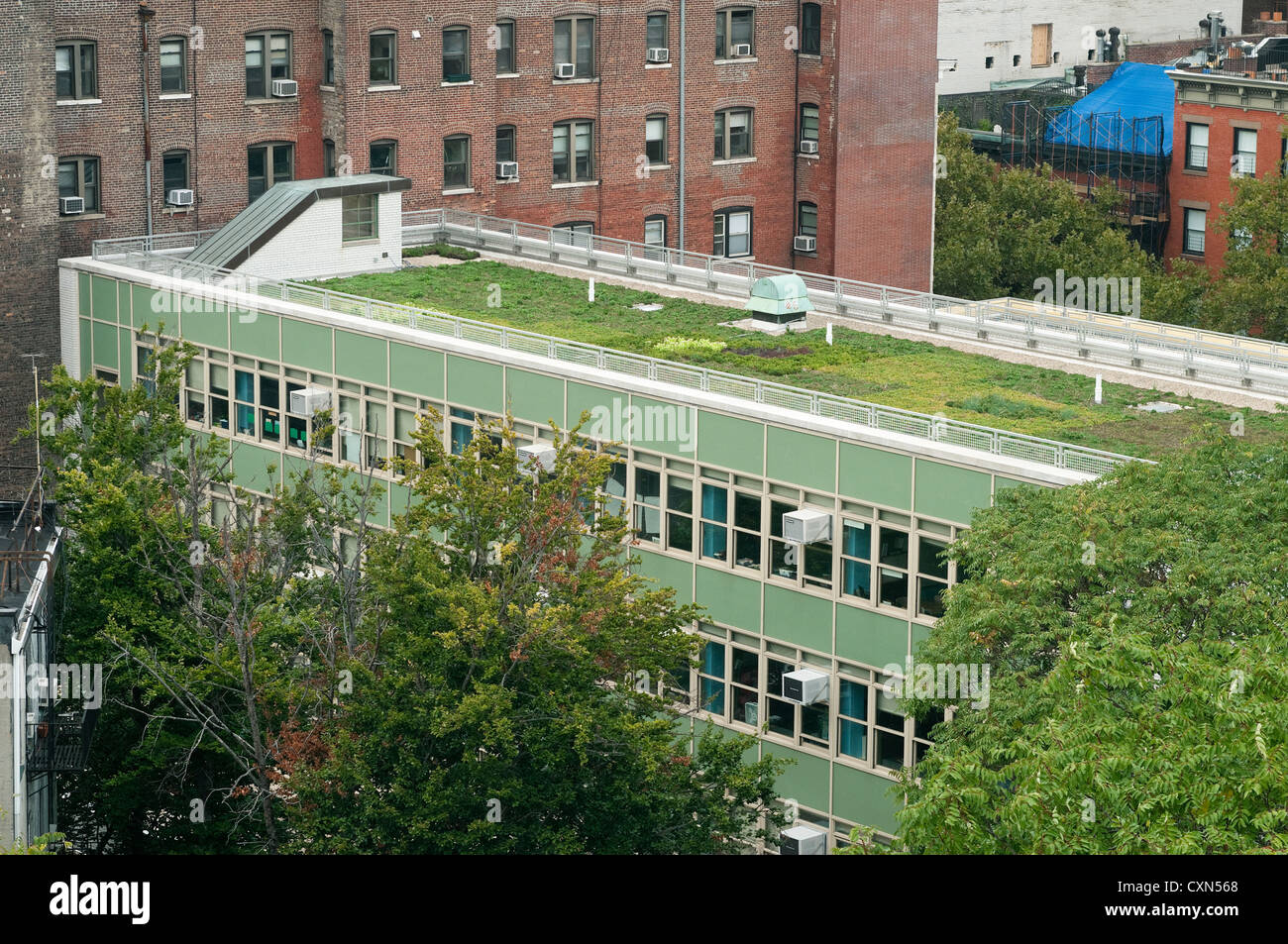 P.S. 41 M with the new green roof - Stock Image