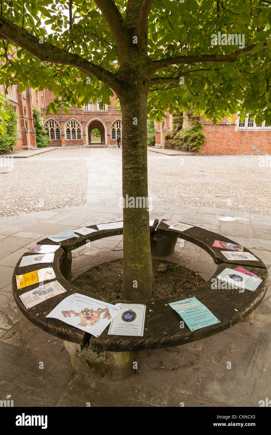 notices pinned to circular bench around tree at winchester college - Stock Image
