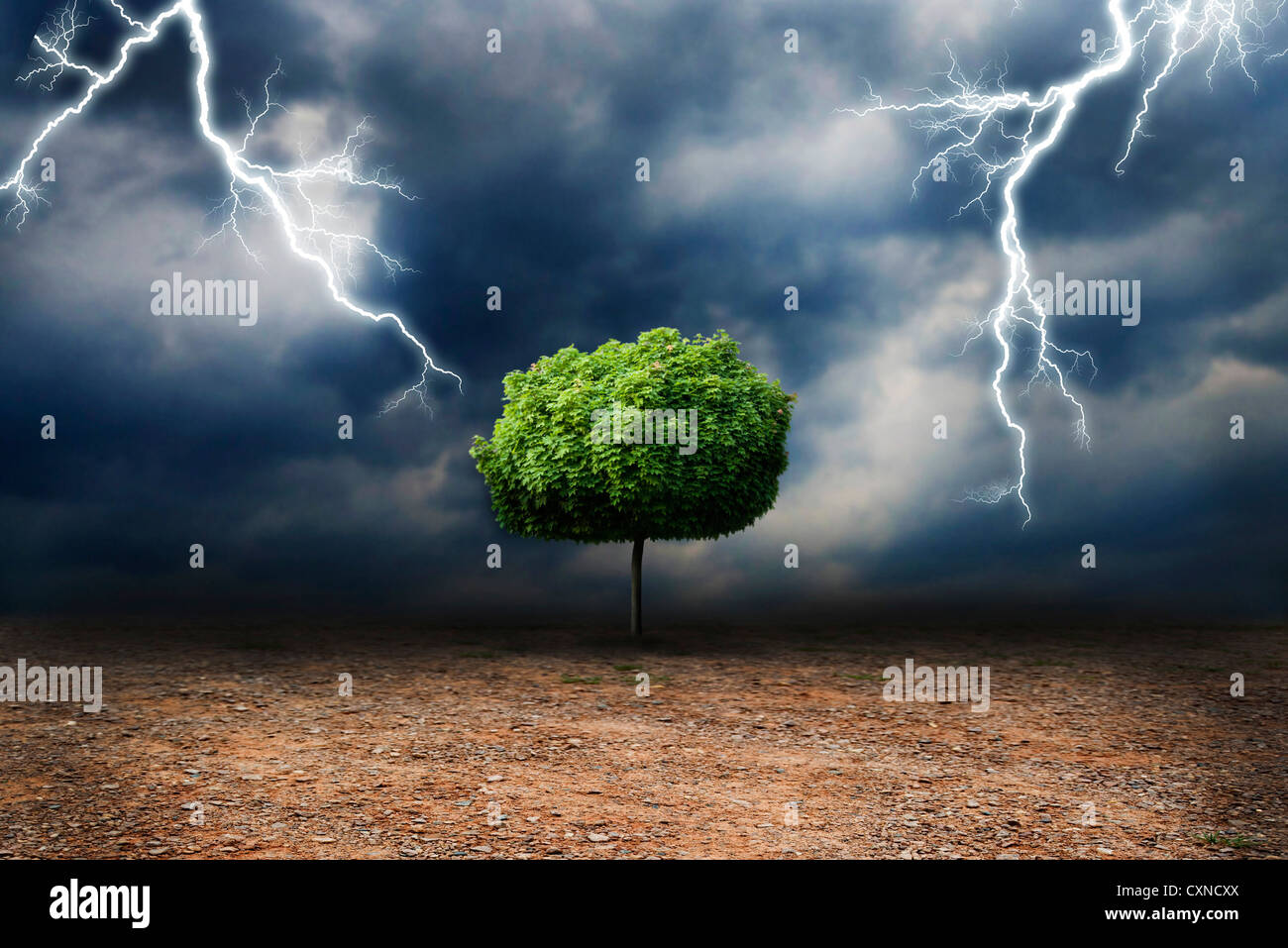 lone tree on a desert land, under a storm, global warming and climate change concept - Stock Image