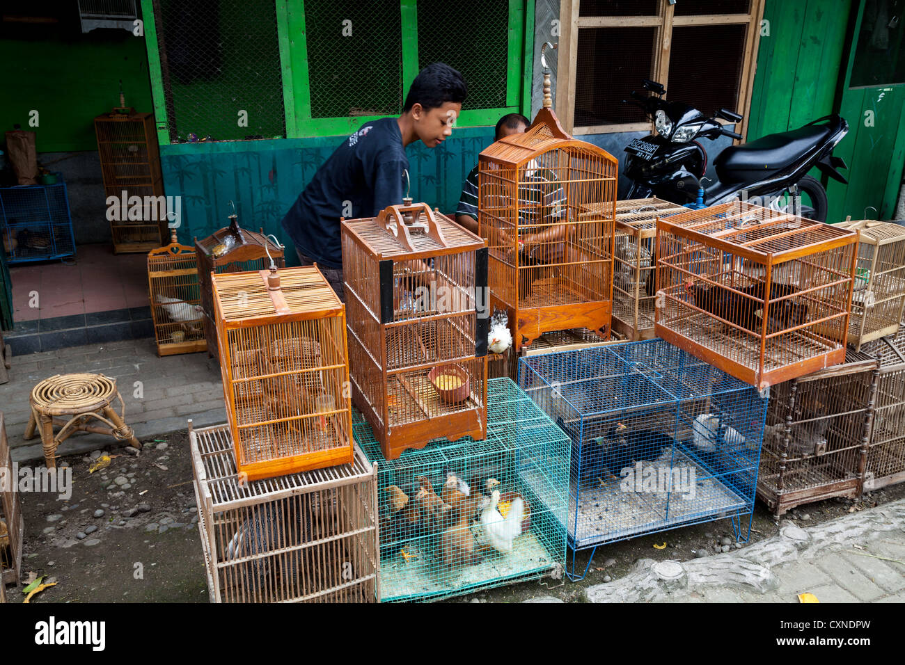 Bird Cages on the Bird Market in Indonesia - Stock Image