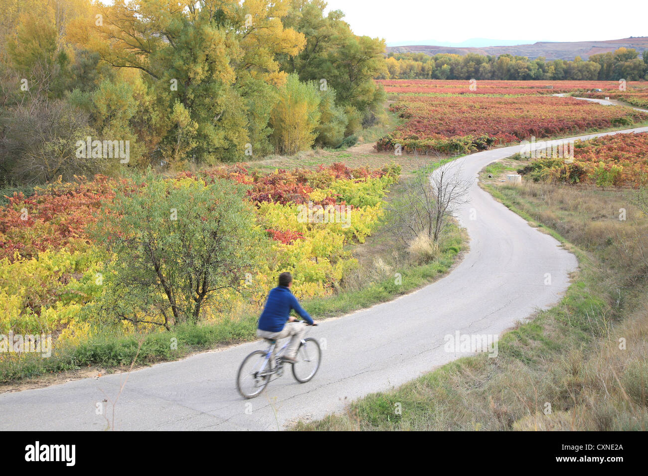 Autumn colors, Cycling in Rioja wine region, Spain, Europe, - Stock Image