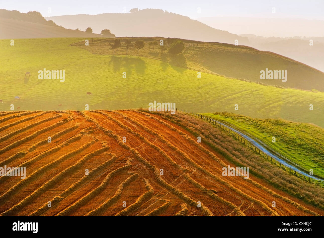 view from the south downs way footpath, sussex, england uk - Stock Image