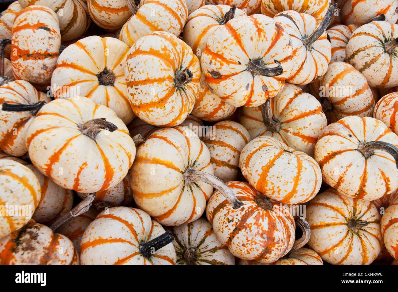 Halloween pumpkins raw background Stock Photo