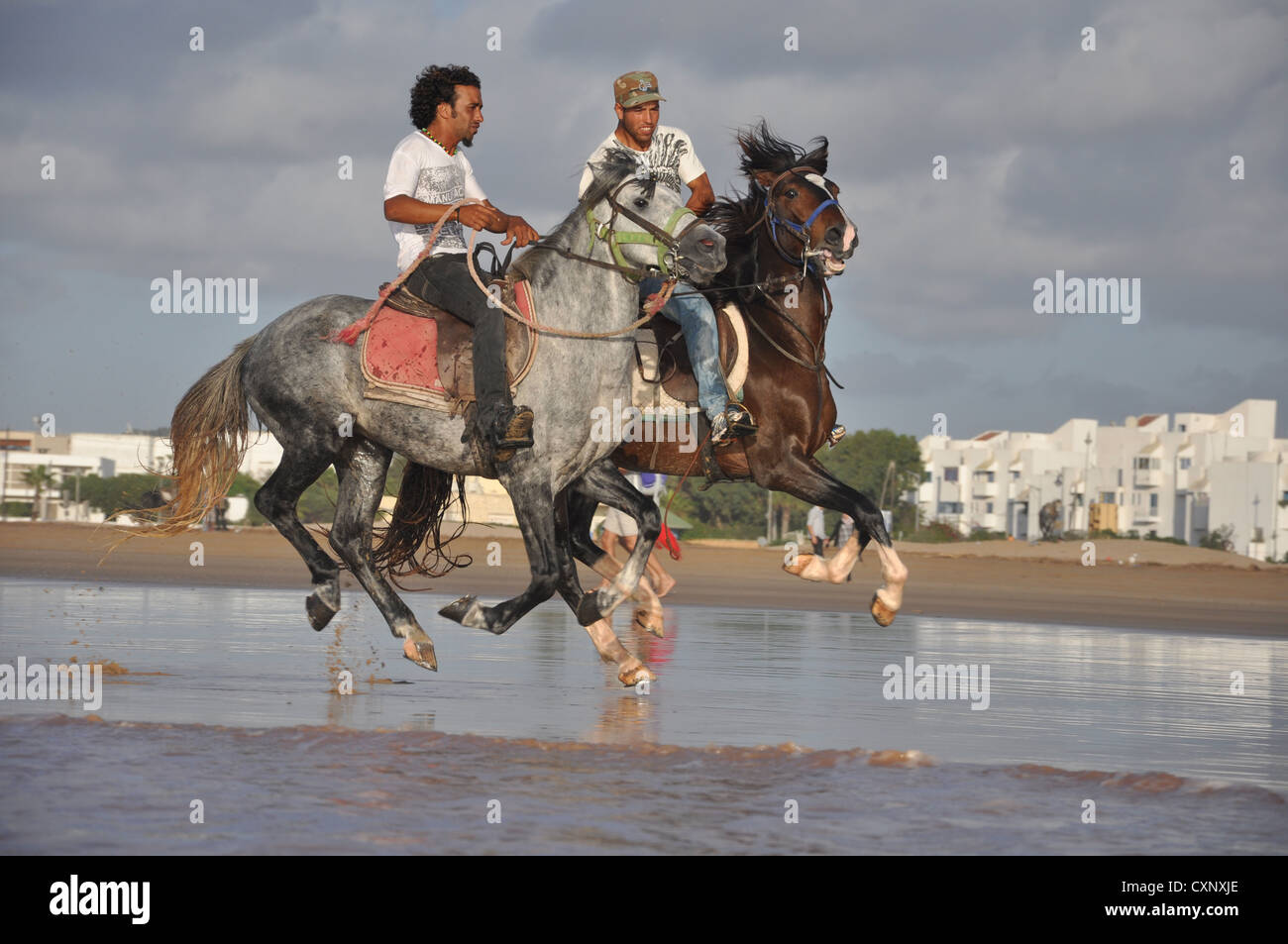 Arabian horses being ridden in the sea - Stock Image