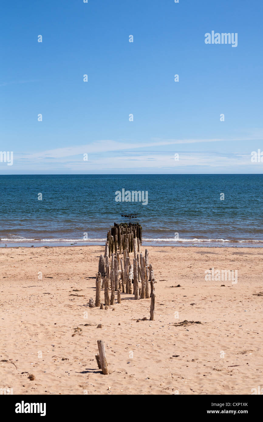 Sticks going out to sea at Dawlish, Devon - Stock Image