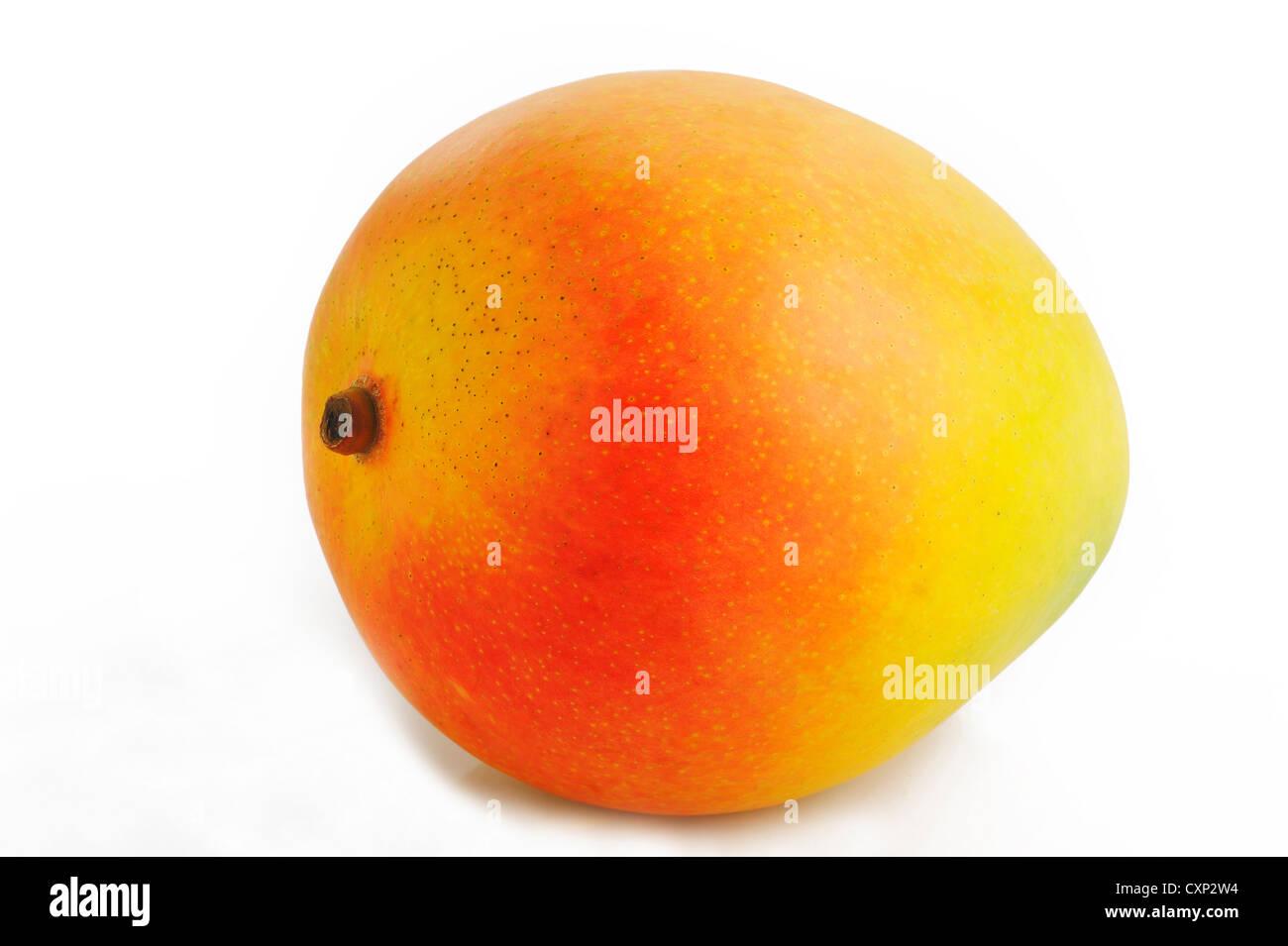 mango on white background - Stock Image