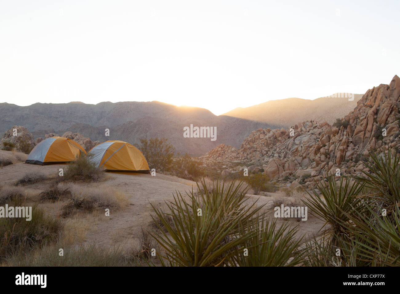 sunrise in Joshua tree with two tents set up. - Stock Image